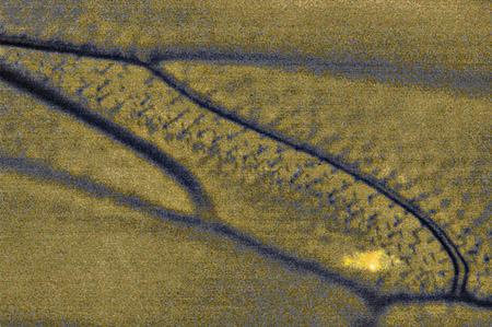 aile-abeille-micro.jpg