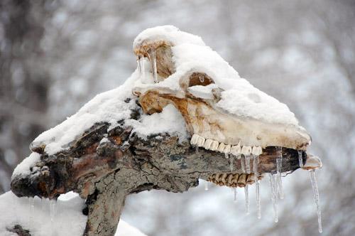 L'hiver - l'attente et la patience