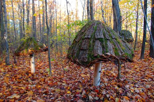 Trois champignons gigantesques
